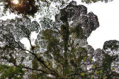 Landscape in Minnamurra Rainforest Center south of Sydney