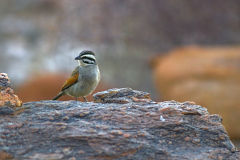 A bird at Valley of a Thousand Hills campsite in Namibia
