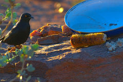 A bird at A Thousand Hills camp site Namibia