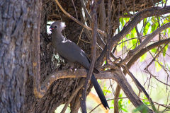 A unknown bird in the Himba region of Namibia