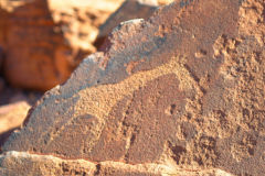 A giraffe rock engraving at Twyfelfontein