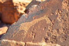 A giraffe rock engraving at Twyfelfontein