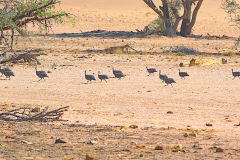 Unknown birds in the himba region of Namibia