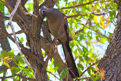 A unknown bird in the himba region of Namibia.