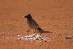 A bird in Namibia