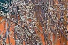 Uknown bush in Namibia