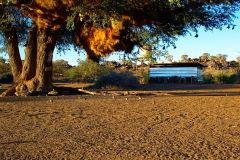 Sociable Weaver nest at Mesosaurus Fossils Campsite Namibia