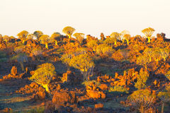 Quiver trees at Mesosaurus Fossils camp site in Namibia