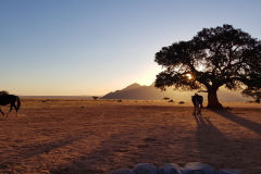 View from the camp site at Namtib Desert Lodge in the Namib Desert of Namibia