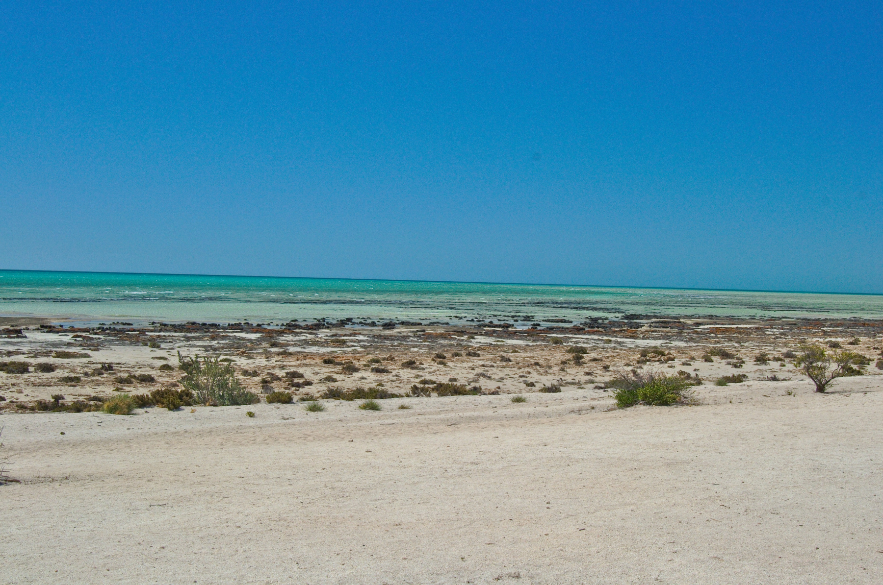 Beach of Hamelin Pool at Shark Bay in Western Australia