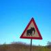 🇳🇦 2019 Namibia - Day 15 - Porcupine Campsite Kamanjab