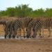 🇳🇦 2019 Namibia - Day 16 - Etosha National Park / Olifantsrus Campsite